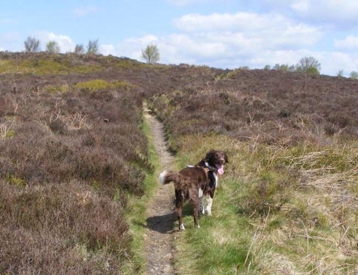 Harden Moor large photo 1
