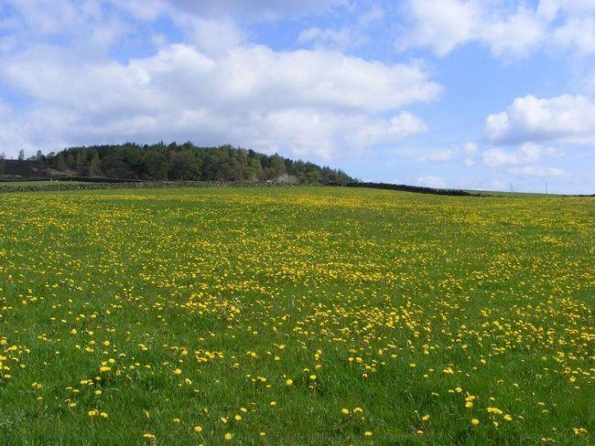 Harden Moor large photo 3