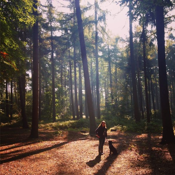 Dog walk at Harlestone Firs