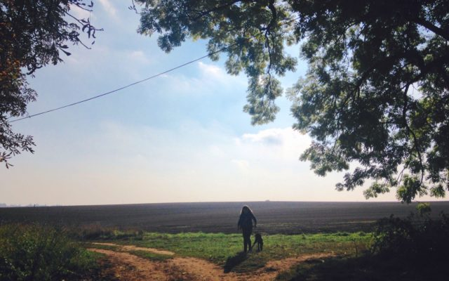 Harlestone Firs Dog walk in Northamptonshire