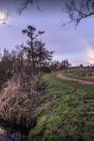 Dog walk at Harmondworths Moor photo