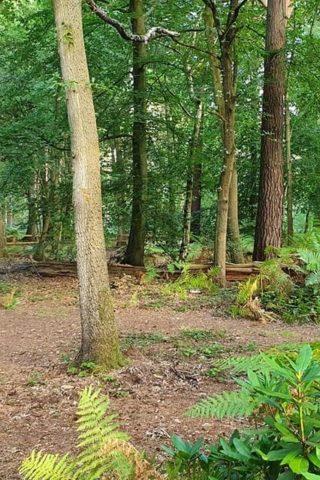 Dog walk at Hartland Country Park photo