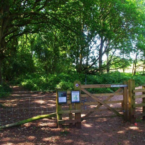 Dog walk at Hartlebury Common