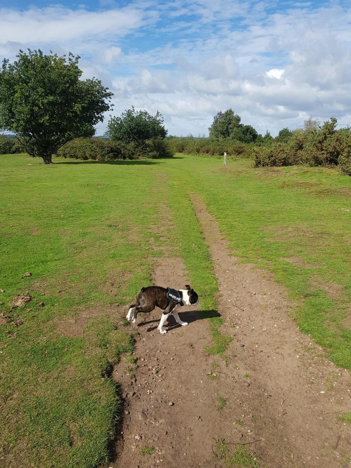 Hartlebury Common large photo 4