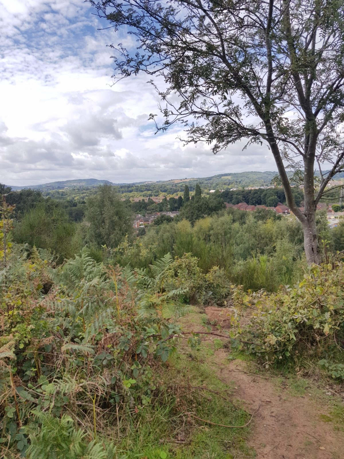 Hartlebury Common large photo 2