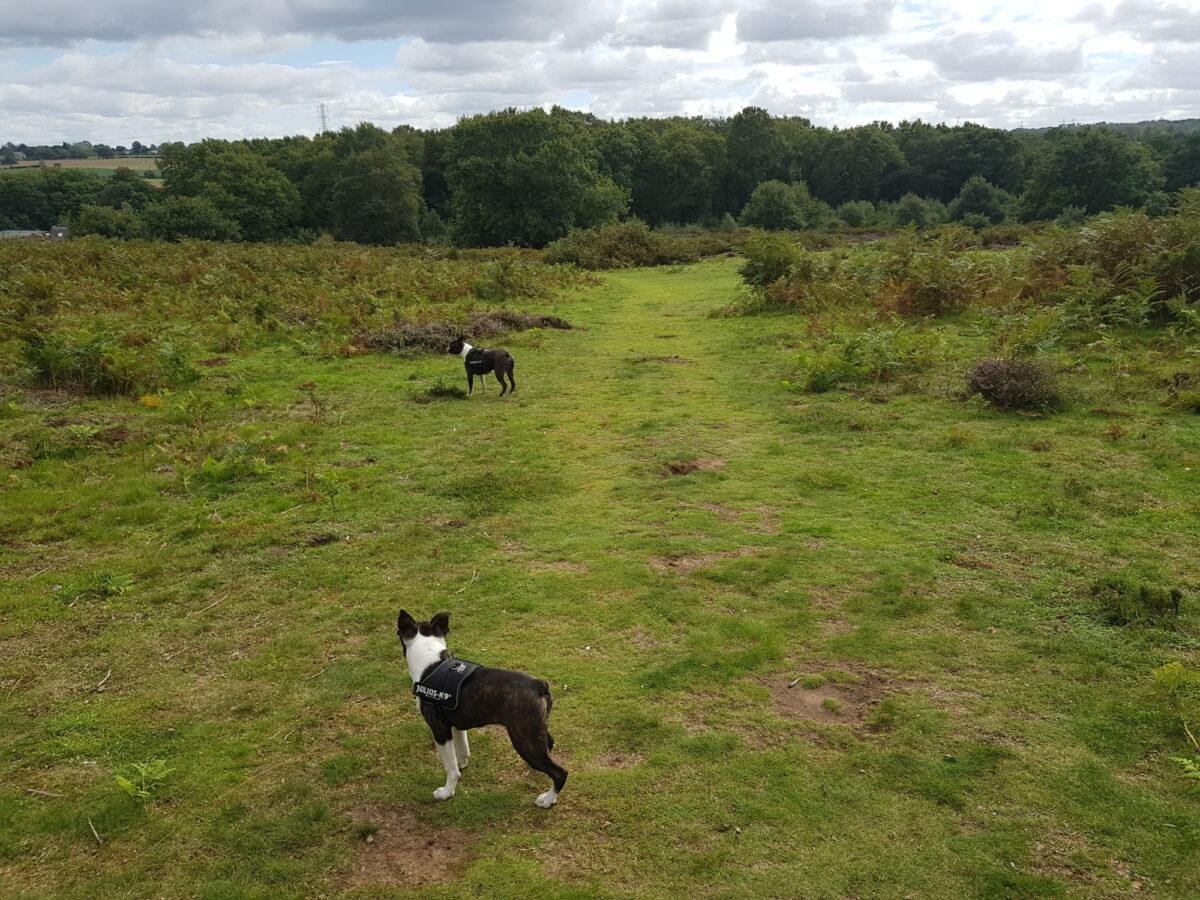Hartlebury Common large photo 1