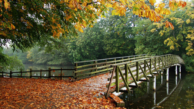 Dog walk at Hartsholme Park