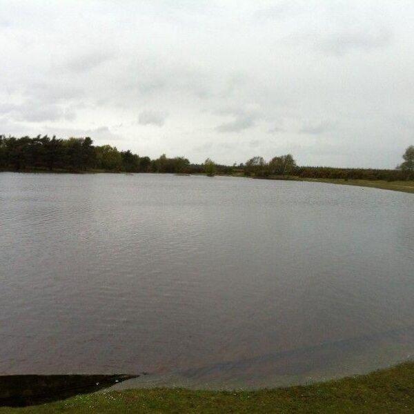 Dog walk at Hatchet Pond (New Forest)