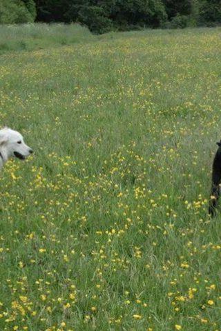 Dog walk at Haughton Dale photo