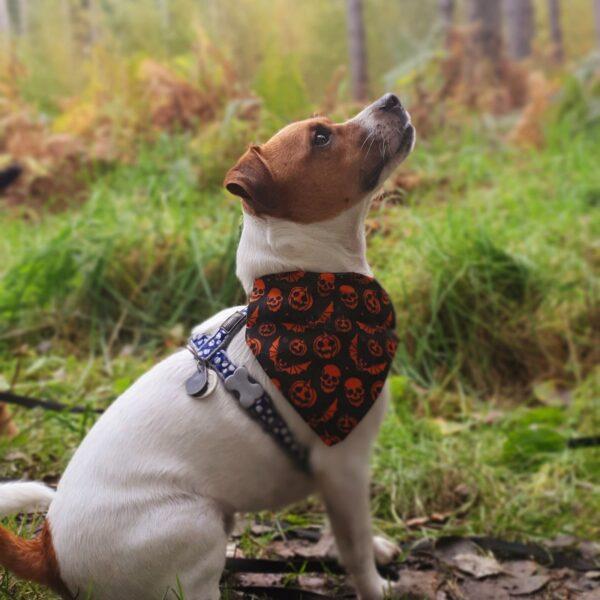 Dog walk at Haw Park Wood