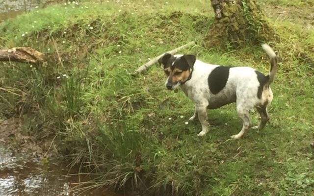 Hawkhill Enclosure Dog walk in Hampshire