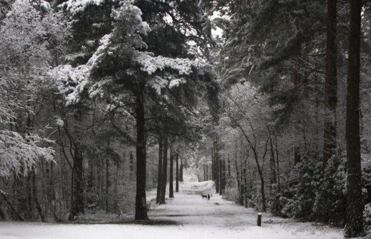Hawley Woods large photo 1