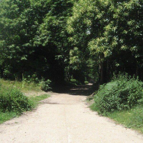 Hawley Woods photo 2
