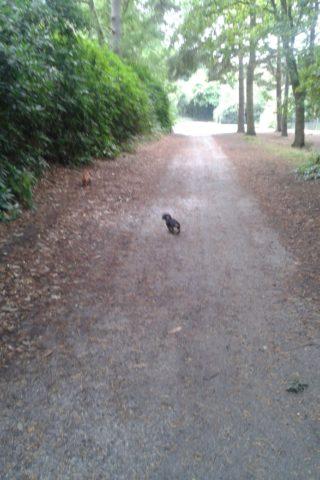 Dog walk at Hawley Woods photo