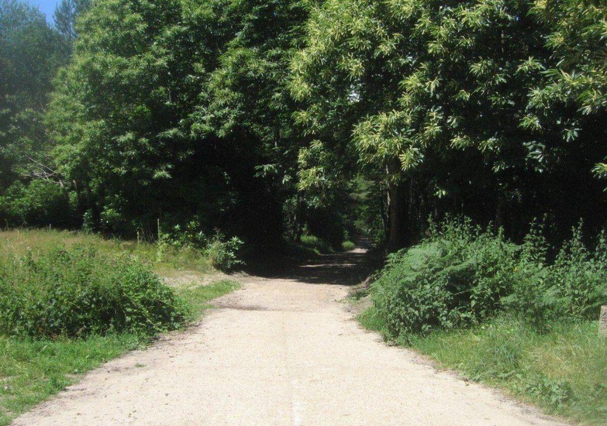 Hawley Woods large photo 2