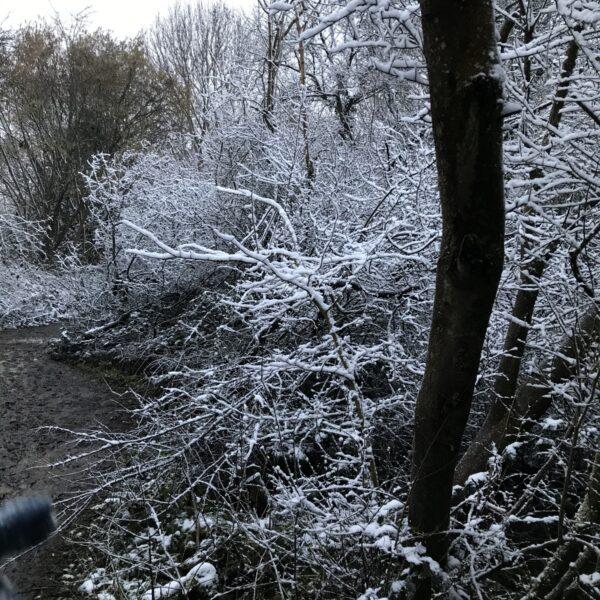 Hayle Park Nature Reserve photo 2