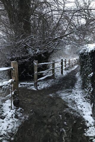 Dog walk at Hayle Park Nature Reserve photo