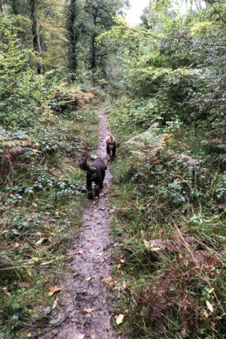 Dog walk at Hazelborough Wood photo