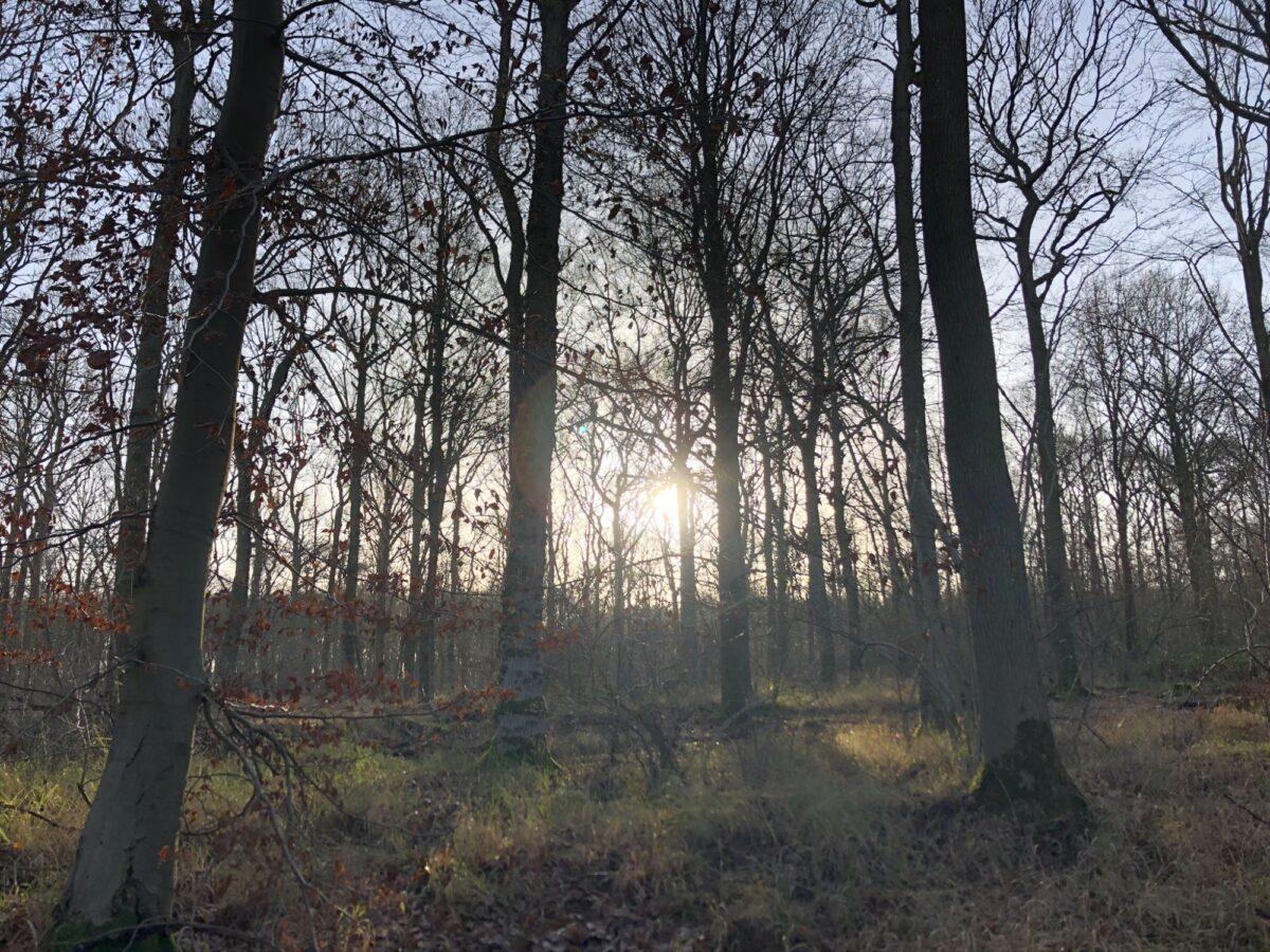Hazelborough Wood large photo 2