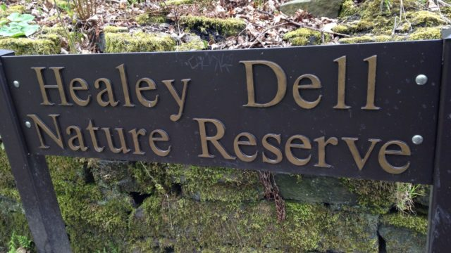 Dog walk at Healey Dell Nature Reserve