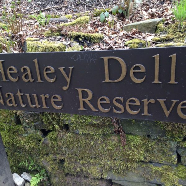 Dog walk at Healey Dell Nature Reserve