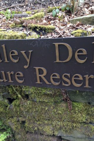 Dog walk at Healey Dell Nature Reserve photo