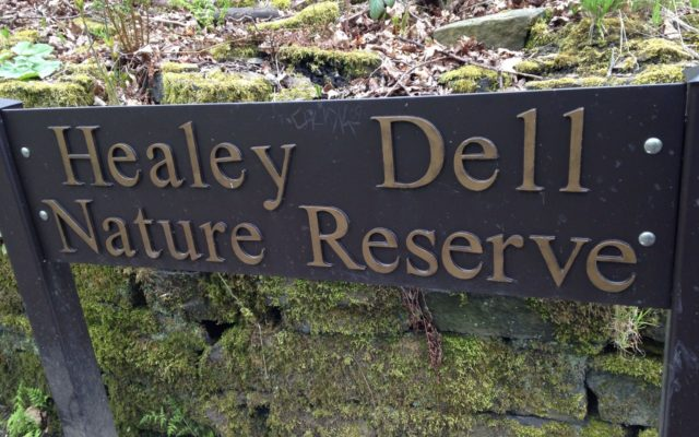 Healey Dell Nature Reserve Dog walk in Lancashire