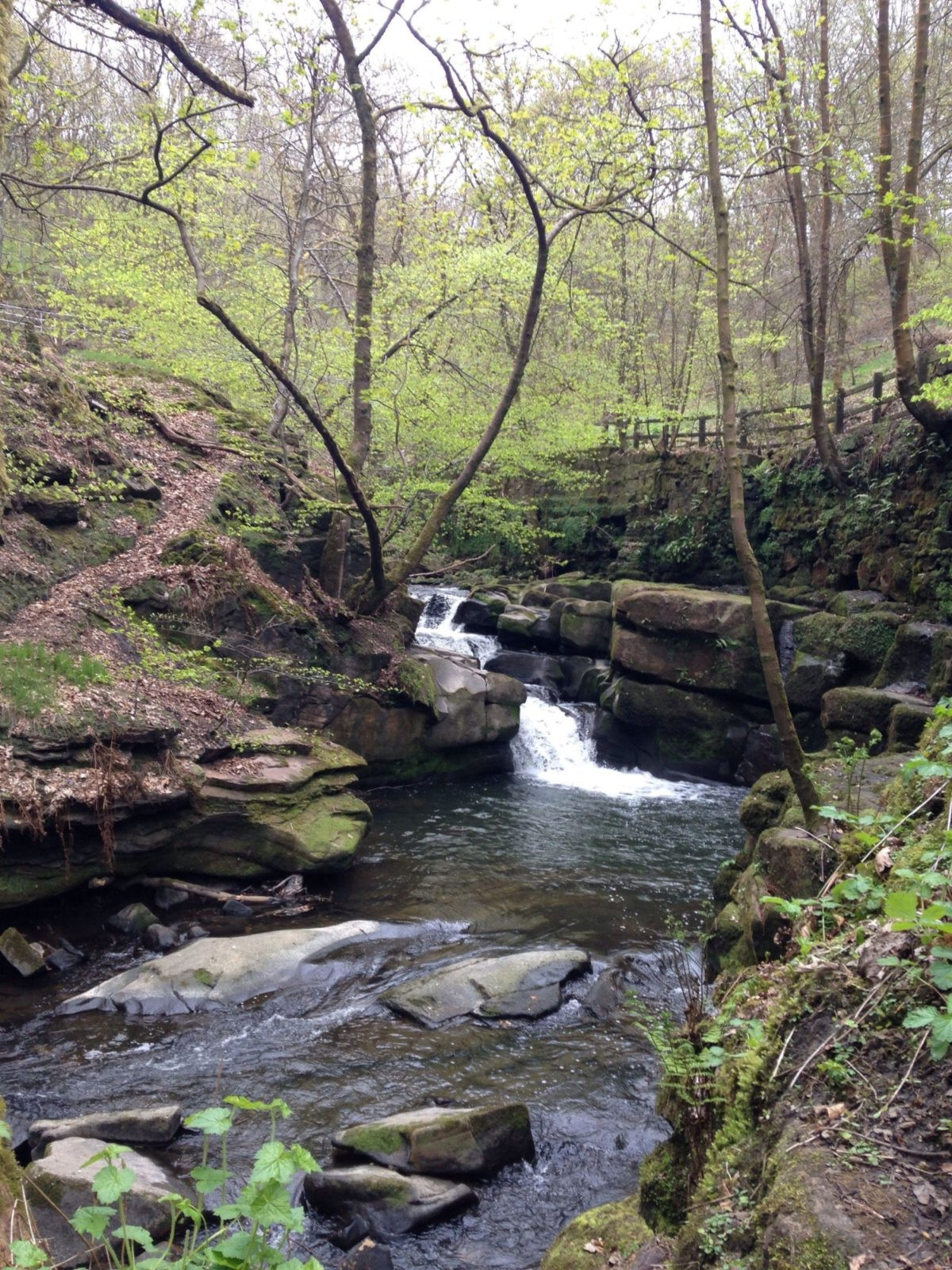 Healey Dell Nature Reserve large photo 3