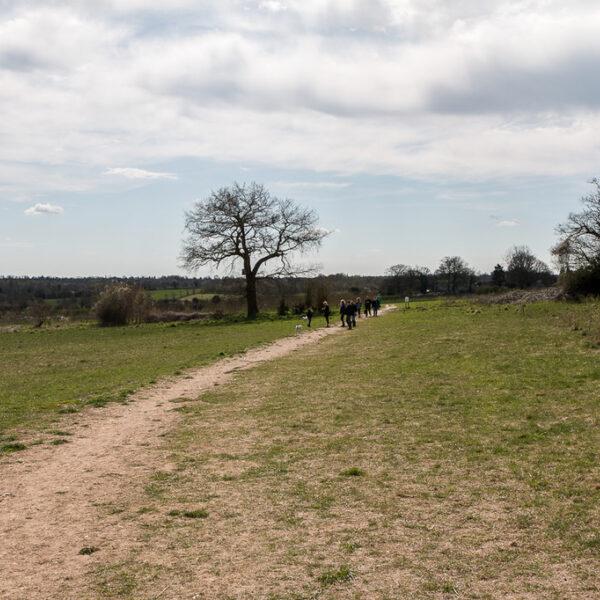 Dog walk at Heartwood Forest, Sandridge