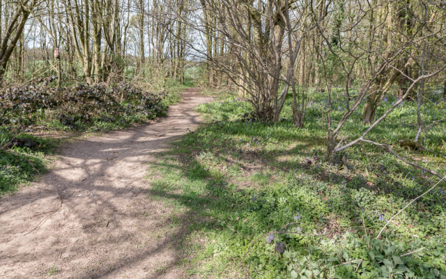 Heartwood Forest, Sandridge Dog walk in Hertfordshire