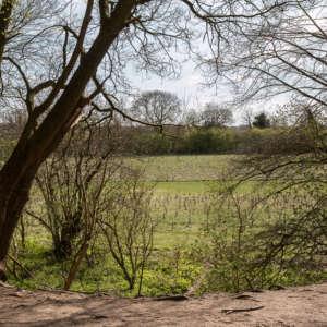 Heartwood Forest, Sandridge