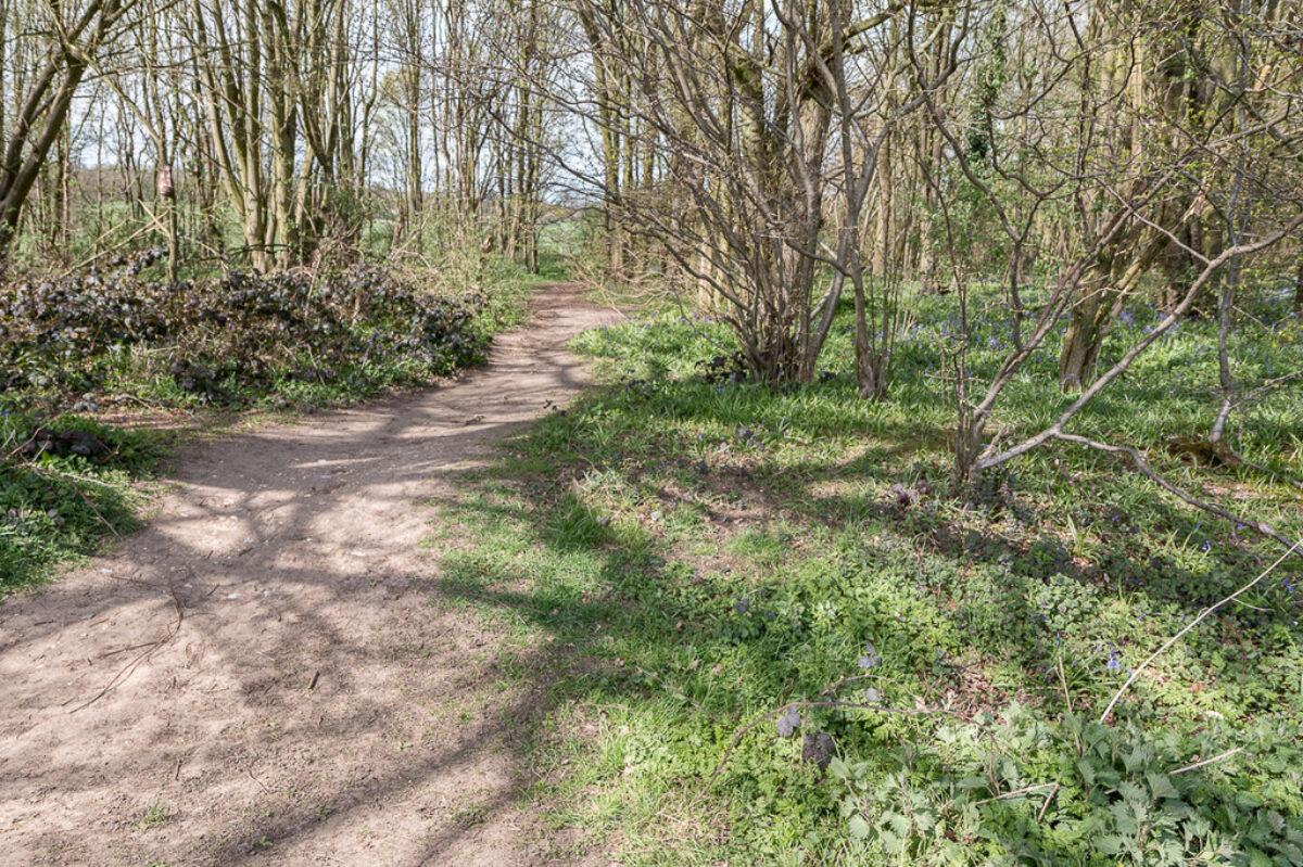 Heartwood Forest, Sandridge large photo 2
