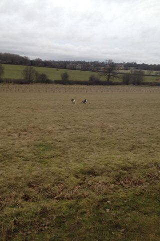Dog walk at Heartwood Forest photo