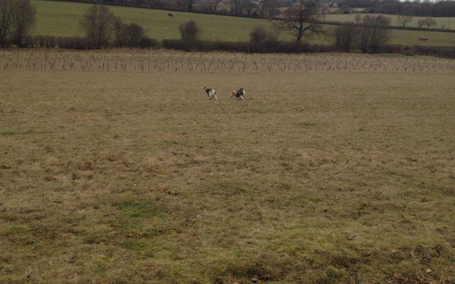 Heartwood Forest Dog walk in Hertfordshire