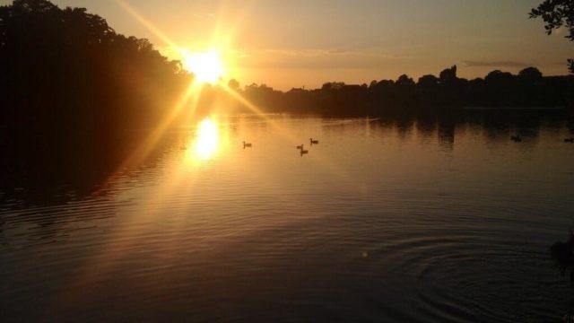 Dog walk at Heath Pond
