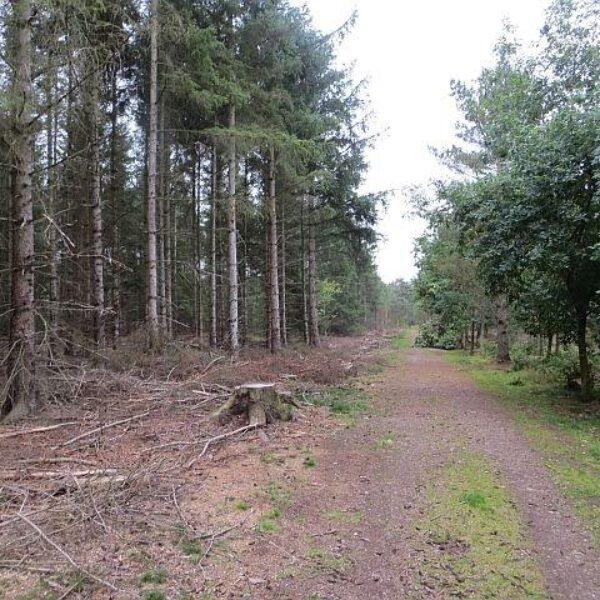 Heatherhall Woods, Ladybank photo 4