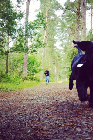 Dog walk at Heatherhall Woods, Ladybank photo