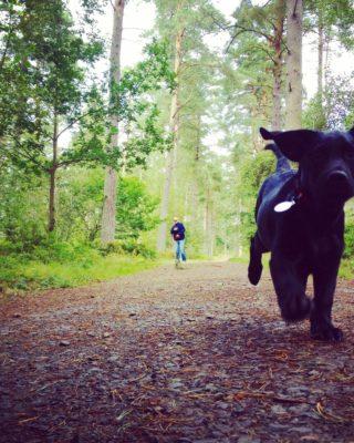 Dog walk at Heatherhall Woods, Ladybank