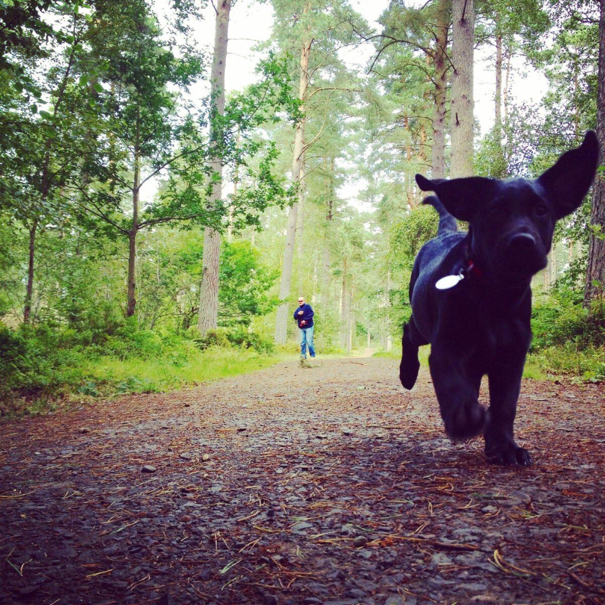 Heatherhall Woods, Ladybank large photo 1