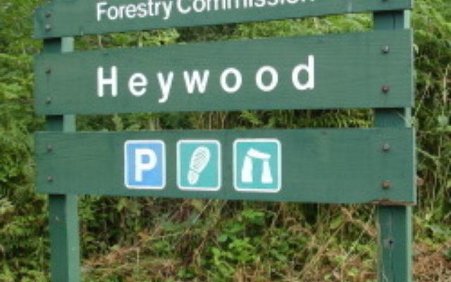 Heywood Woods Dog walk in Devon