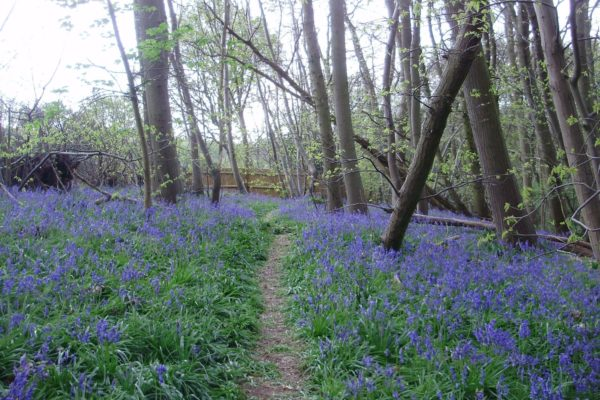 Highwoods Country Parkphoto