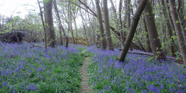 Hillhouse Wood, West Bergholt, Colchester