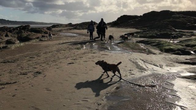 Dog walk at Hilbre Island
