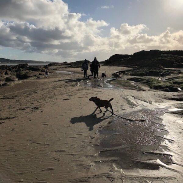 Dog walk at Hilbre Island