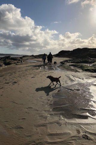 Dog walk at Hilbre Island photo