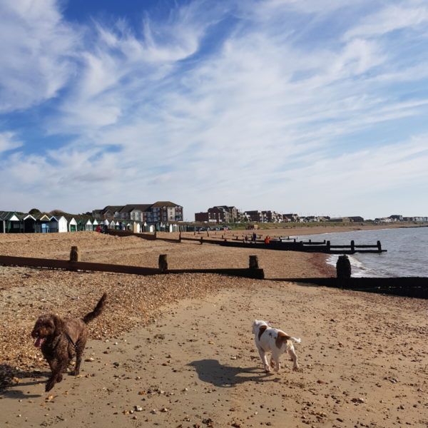 Dog walk at Hill Head to Lee on Solent