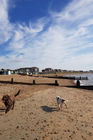 Dog walk at Hill Head to Lee on Solent photo