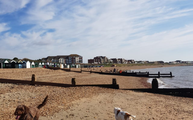 Hill Head to Lee on Solent Dog walk in Hampshire