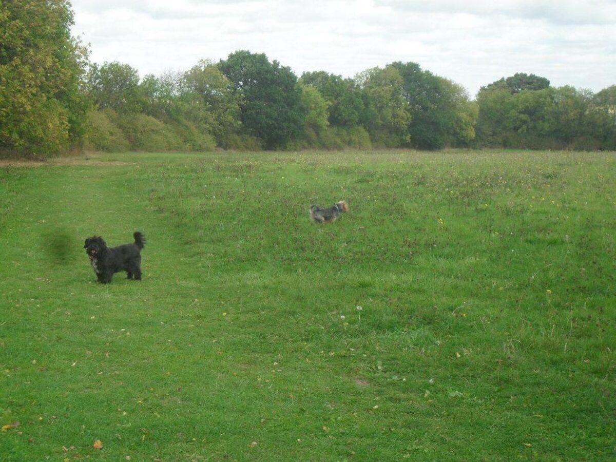 Hill Rise Dog Walk, St Ives large photo 1
