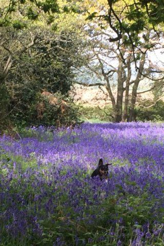 Dog walk at Hillhouse Wood, West Bergholt, Colchester photo